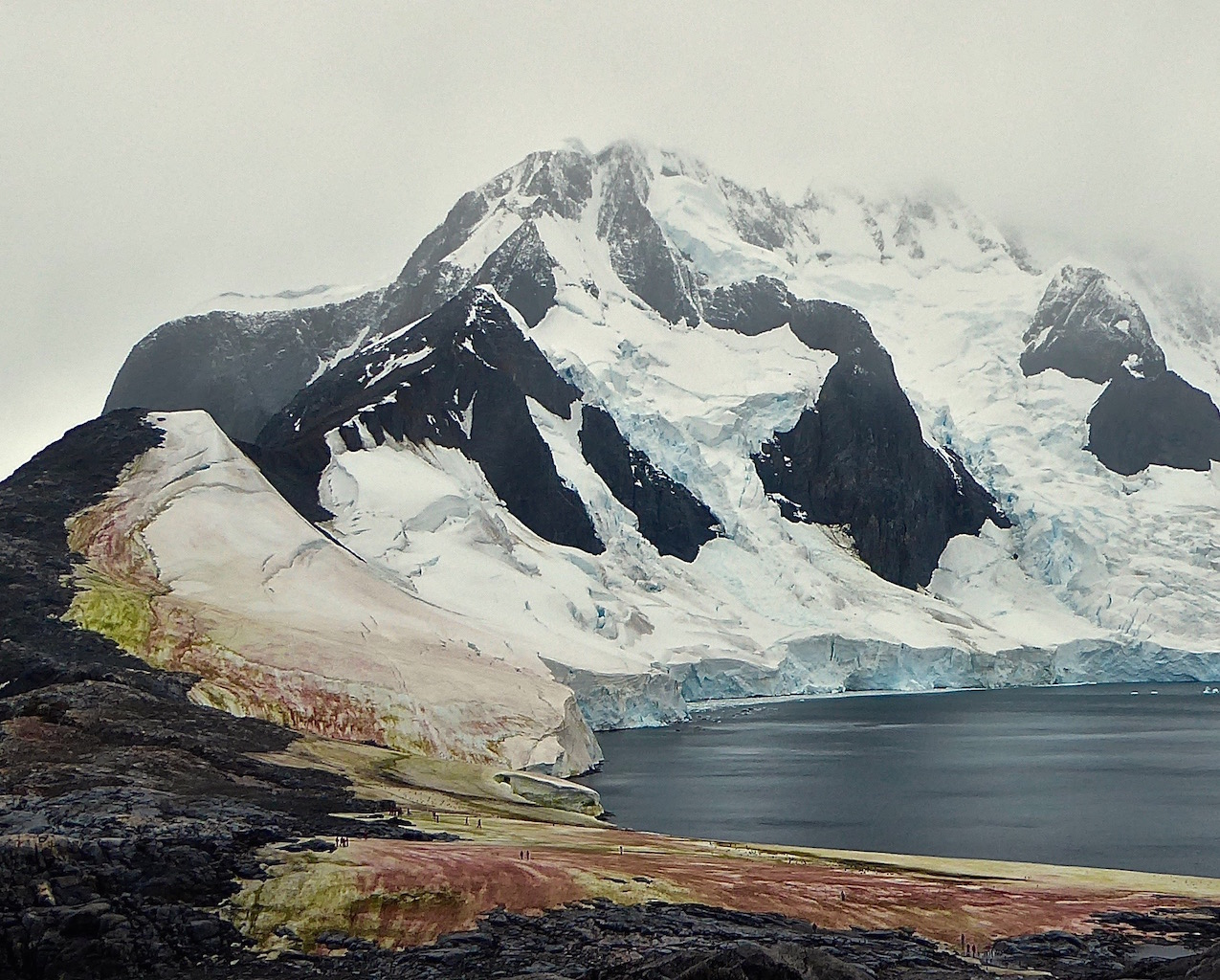 Red and green algae on snow and glaciers on the Antarctic Peninsula.