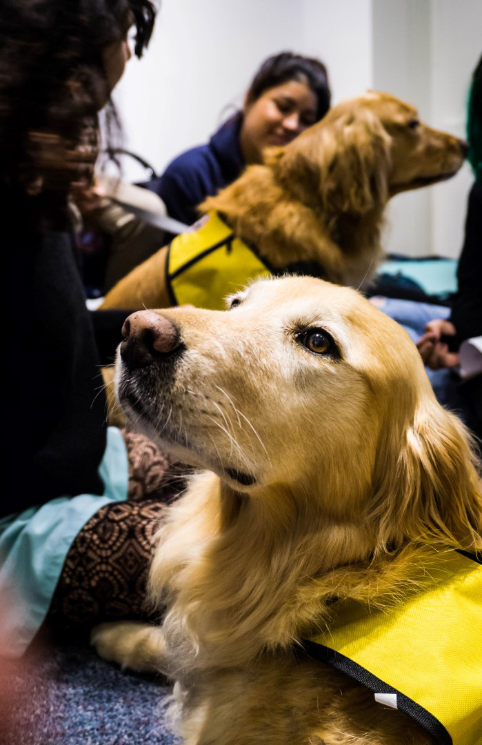 """Western Libraries will once again be joined by members of the """"Canines & Cats on Campus"""" registered therapy animal program from Monday, March 11 through the morning of Thursday, March 21."""