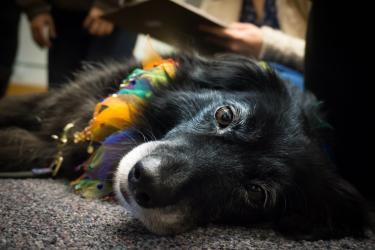 """Western Libraries will once again be joined by members of the """"Canines & Cats on Campus"""" registered therapy animal program from Monday, June 3 through Wednesday, June 12."""