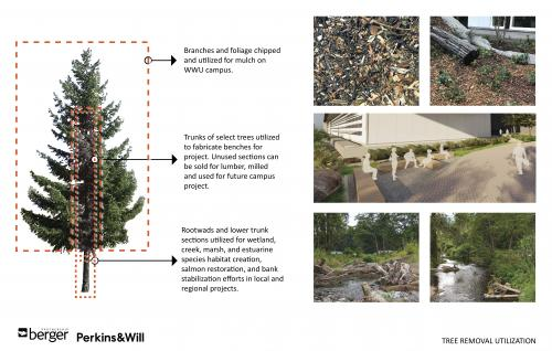 Diagram shows how the trees near the new building will be reused in other projects