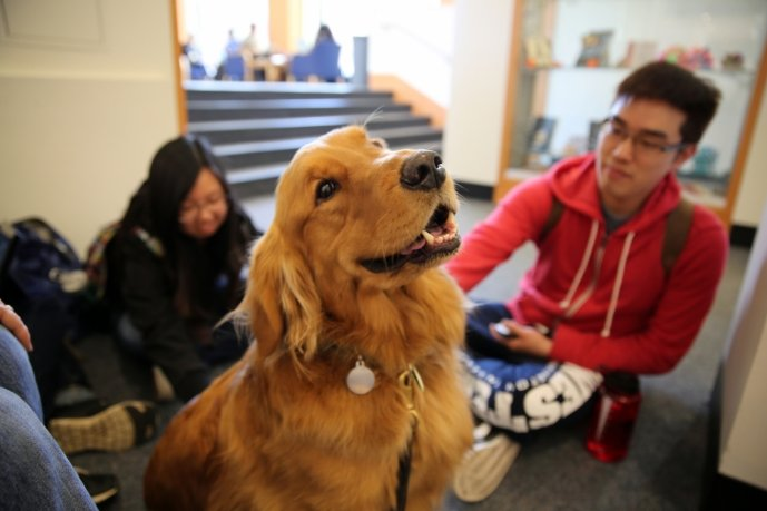 Bridger Cindy Custer was all to happy to sit around a circle of students and receive infinite petting this past Monday. Western students Phillip Chen a Sophomore and Amber Ma a Freshman were all enjoying his company while they took a break from their stud